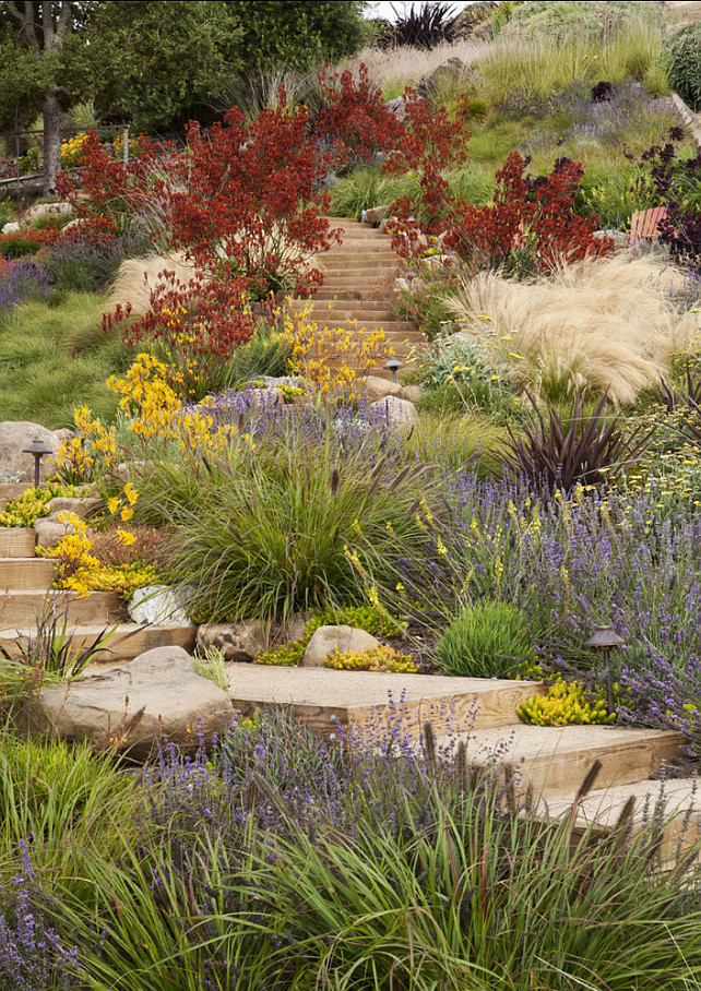Landscaping. Low maintenance and drought & deer tolerant planting provide a gracious transition between the built environment and the adjoining openlands. #Landscaping